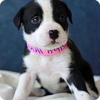 Adopt A Pet :: Helen - Waldorf, MD