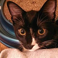 Adopt A Pet :: Maggie - St Paul, MN