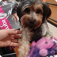 Adopt A Pet :: Paulina (Pau) - San Diego, CA