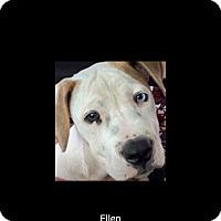Adopt A Pet :: Ellen - Pompano Beach, FL