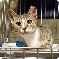 Adopt A Pet :: Andromeda - Brooklyn, NY