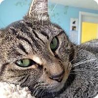 Adopt A Pet :: Adelle - Fairfax, VA
