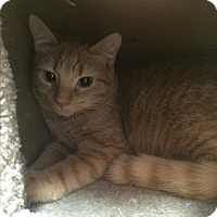 Adopt A Pet :: James Bond - Lunenburg, MA