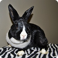 Other/Unknown Mix for adoption in Michigan City, Indiana - Oreo