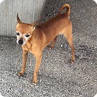 Adopt A Pet :: Bendito - Key Biscayne, FL