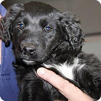 Adopt A Pet :: Xq litter - Arnold - Livonia, MI
