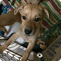 Adopt A Pet :: Missy - Bernardston, MA