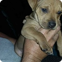 Adopt A Pet :: Henry ready 2/10/17 - Palm Bay, FL