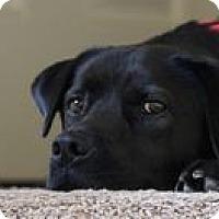 Adopt A Pet :: Yoko - El Cajon, CA