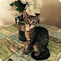 Adopt A Pet :: Julius - Old Bridge, NJ