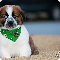 Adopt A Pet :: Mr. Cuddles - Albany, NY