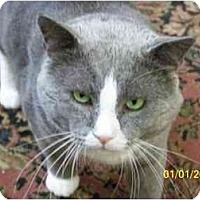 Adopt A Pet :: Dorian - Putnam Valley, NY