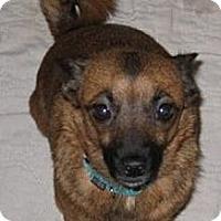 Adopt A Pet :: annette - Long Beach, CA