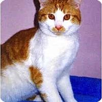 Adopt A Pet :: Ross - Medway, MA