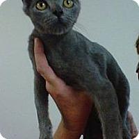 Adopt A Pet :: Halston - Cocoa, FL
