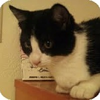 Adopt A Pet :: Mr. Kitty - Modesto, CA