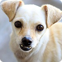 Adopt A Pet :: Sally - Scottsdale, AZ