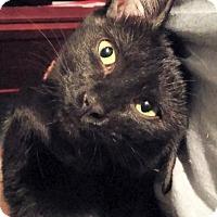 Adopt A Pet :: Sahara - The Colony, TX