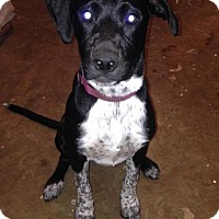 Adopt A Pet :: Gabby in CT - Manchester, CT