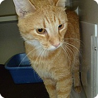 Adopt A Pet :: Sherlock - Hamburg, NY