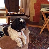 Adopt A Pet :: TEDDY-pending - Eden Prairie, MN