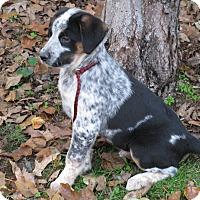 Adopt A Pet :: Clark - Bedminster, NJ