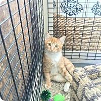 Adopt A Pet :: Rory - Redwood City, CA