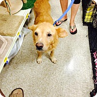 Adopt A Pet :: Marley - Sugar Land, TX