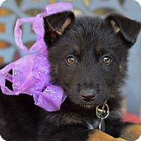 Adopt A Pet :: Olympia - Baton Rouge, LA