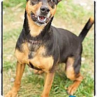 Adopt A Pet :: Oliver (Reduced Adoption Fee) - Hagerstown, MD