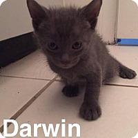 Adopt A Pet :: Darwin - Gainesville, FL