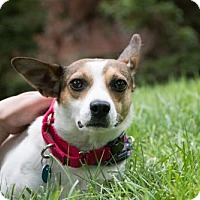 Adopt A Pet :: Daisy (Has application) - Washington, DC