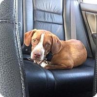 Adopt A Pet :: Reggie - Wichita, KS