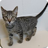 Adopt A Pet :: Aaron - Council Bluffs, IA