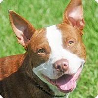 Adopt A Pet :: GABE - Fernandina Beach, FL