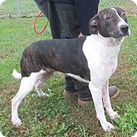 Adopt A Pet :: Asher - Reeds Spring, MO