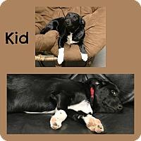 Adopt A Pet :: Kid - Idaho Falls, ID