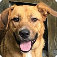 Adopt A Pet :: Benji *MEET ME!* - Wakefield, RI