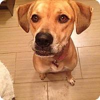 Adopt A Pet :: Rumor - Grafton, WI