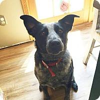 Adopt A Pet :: CHASE - NYC, NY