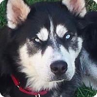 Adopt A Pet :: KAI - Rancho Mirage, CA