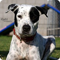 Adopt A Pet :: Biskit - Phoenix, AZ