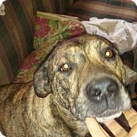 Adopt A Pet :: LOLITA - Strattanville, PA