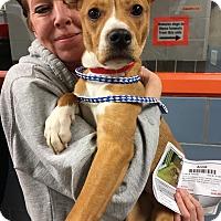 Adopt A Pet :: Annie - Elgin, IL