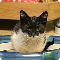 Adopt A Pet :: Nickel - Hastings, NE