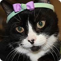 Adopt A Pet :: MEADOWS - Clayton, NJ
