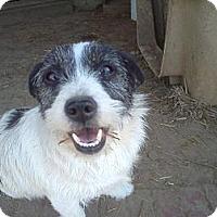 Adopt A Pet :: Dean - Albany, NY