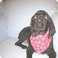 Adopt A Pet :: Boo  -VA  Adopted! - Kannapolis, NC