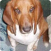 Adopt A Pet :: Yukon - Phoenix, AZ