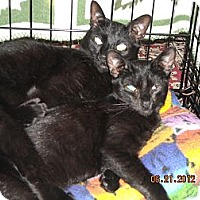 Adopt A Pet :: Picassa and babies - Riverside, RI